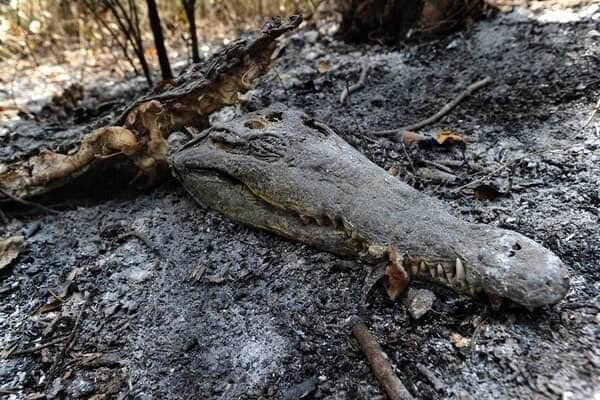 Lakhs of wild animals are charred to death