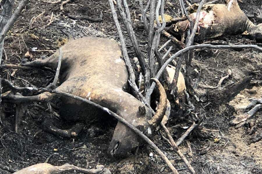 Lakhs of wild animals died in the Amazon Fire. Shouldn't  Bolsonaro be prosecuted for Crime against Humanity?