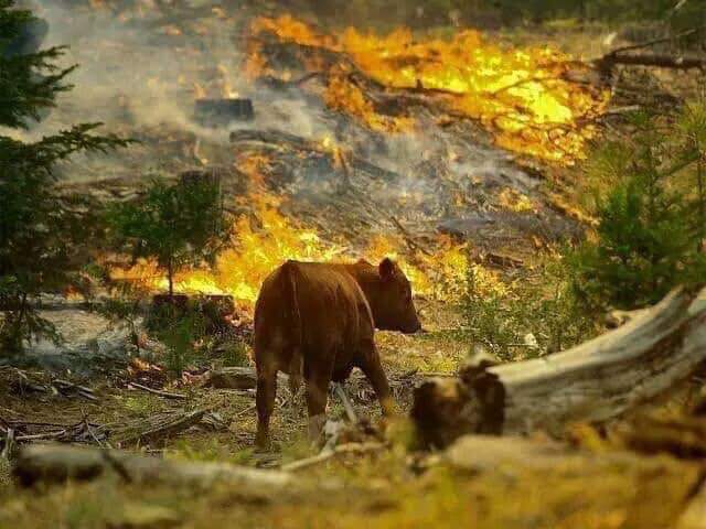 Wild Animals in middle of the burning Amazon Rain Forest