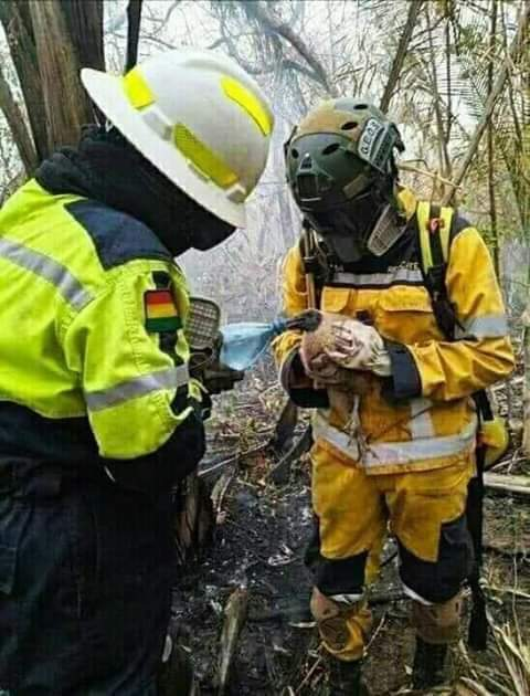 Rescue workers trying to save the life of a bird