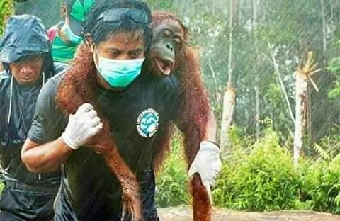 Rescue workers saving the lives of animals they could save