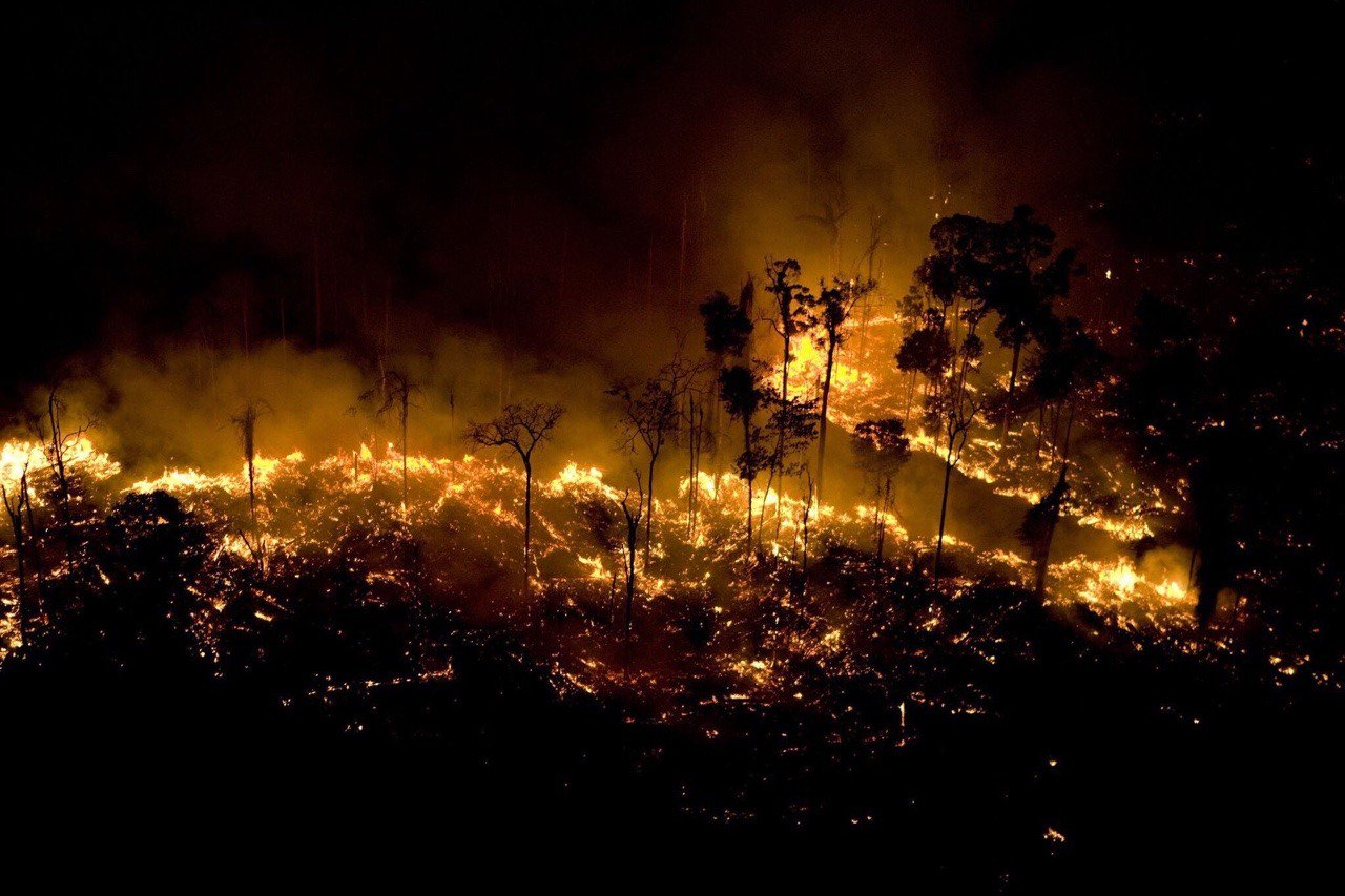 Wild Amazon fire burning everything coming on its way, Killing all wild life
