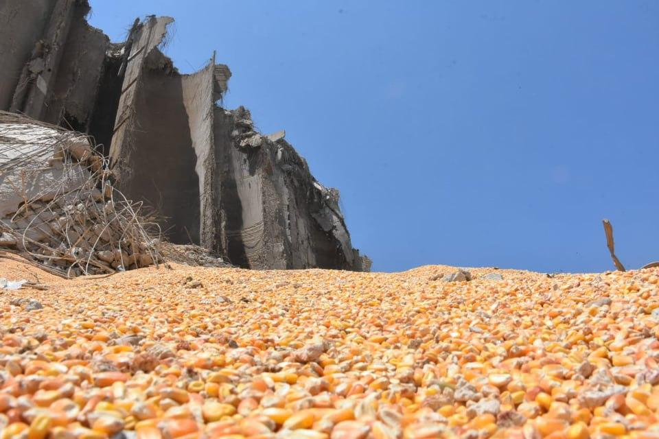 Destruction after Blast in Beirut, Lebanon : Grains at port were destroyed in the blast. it's all contaminated with toxins