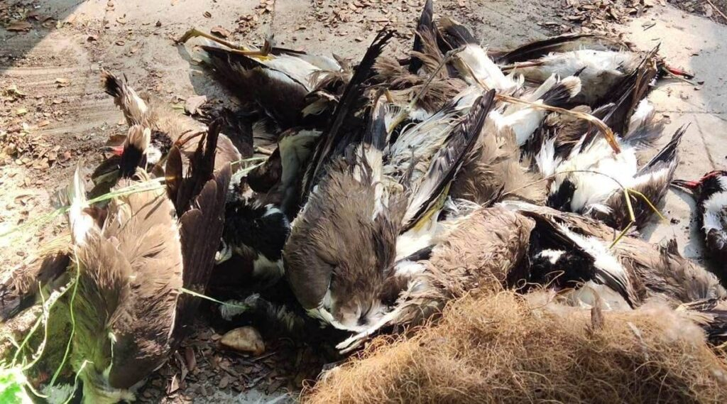 Did China launch Another Major Bio-Weapons Attack On India And World Using Migratory Birds As A Carrier?