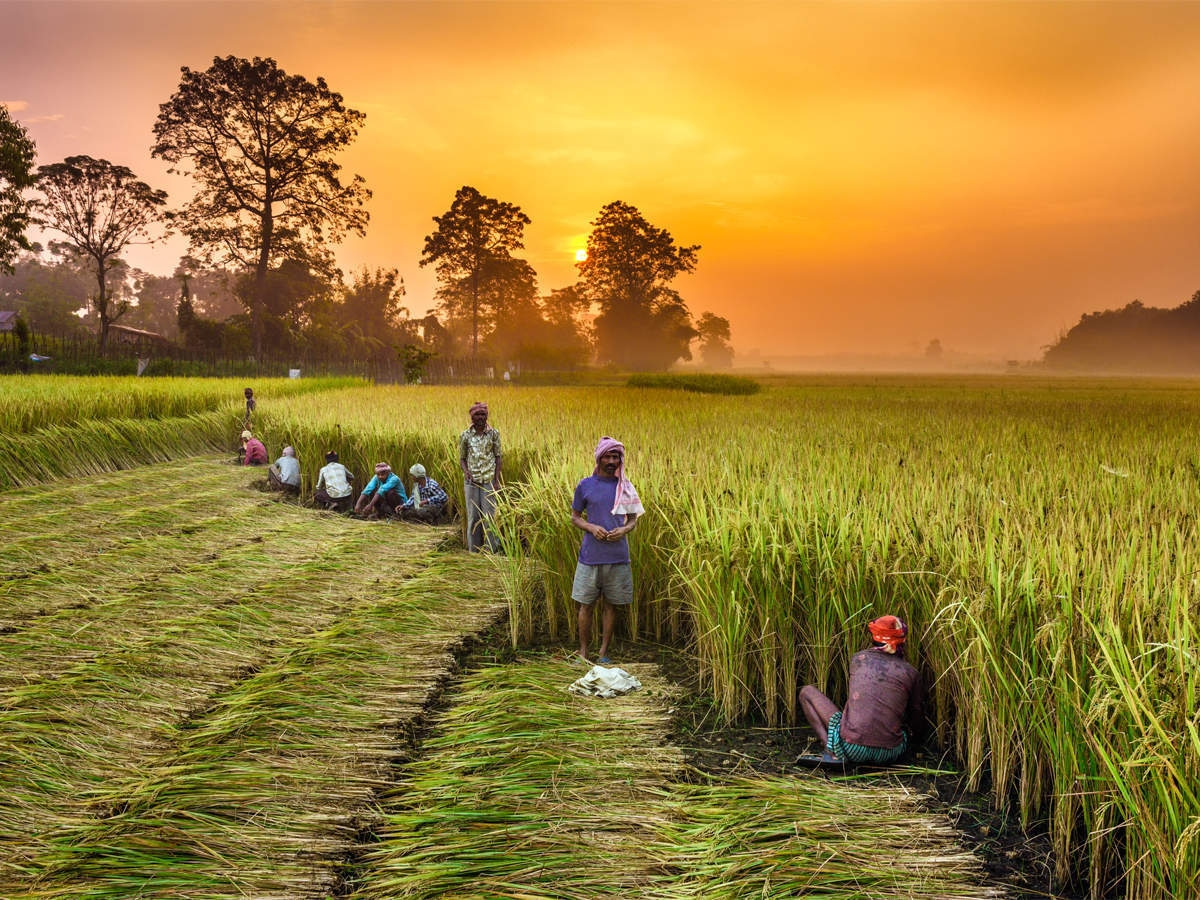 Farmers Bill Demystified Part 2 : Know The Truth About Farm Laws And Don't Fall in Propaganda